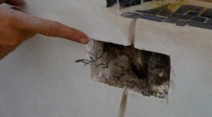 structural crack with roots in it